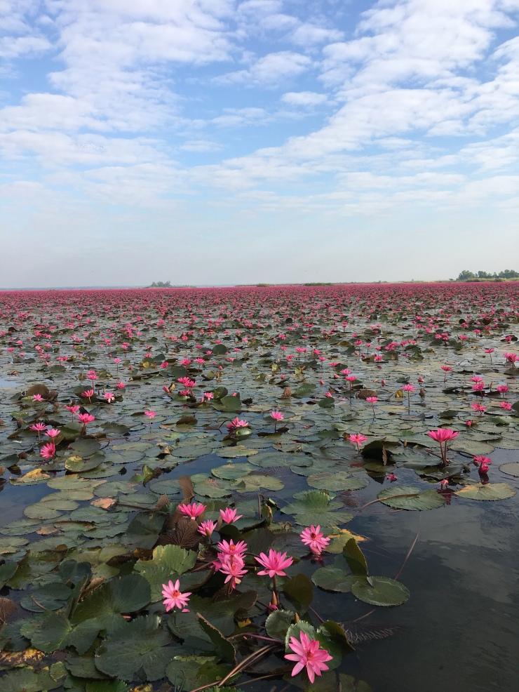 This was taken at Red Lotus Lake, Udon Thani, Thailand